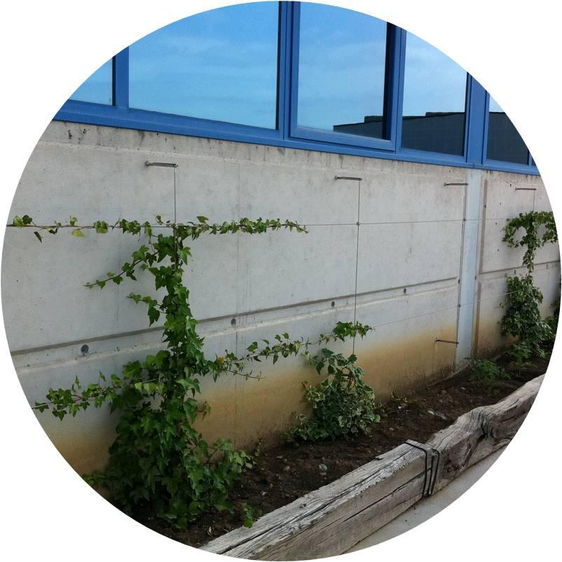 Malla verde con netclip - Aciarium